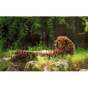 Схема Леопард Набор для частичной вышивки бисером Color Kit
