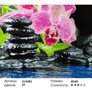 Количество цветов и сложность Орхидея и камни Раскраска картина по номерам акриловыми красками на холсте