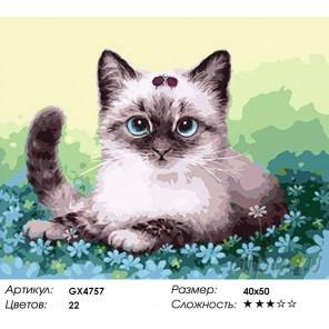 Количество цветов и сложность Котенок в незабудках Раскраска картина по номерам акриловыми красками на холсте