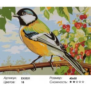 Синичка в саду Раскраска картина по номерам акриловыми красками на холсте