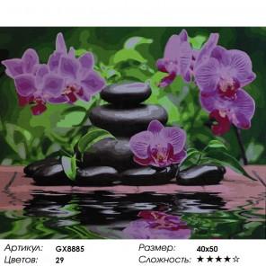 Свежесть орхидей Раскраска картина по номерам акриловыми красками на холсте