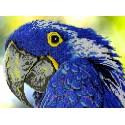 Попугай Набор для вышивки бисером Вышиваем бисером