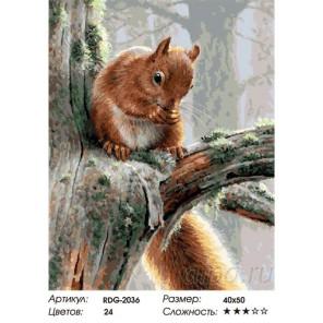 Белка на дереве Раскраска картина по номерам акриловыми красками на холсте
