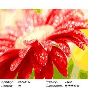 Количество цветов и сложность Яркая гербера Раскраска картина по номерам акриловыми красками на холсте