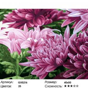 Лиловые хризантемы Раскраска картина по номерам на холсте