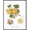 Ветка яблони Набор для вышивания Thea Gouverneur