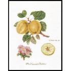 Ветка яблони Набор для вышивания Thea Gouverneur 2057