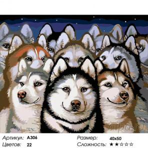 Количество цветов и сложность Хаски Раскраска картина по номерам на холсте A306