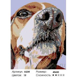 Количество цветов и сложность Спотти Раскраска картина по номерам на холсте A234