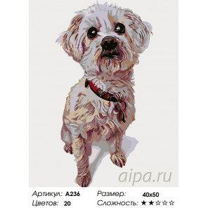 Количество цветов и сложность Тобиас Раскраска картина по номерам на холсте A236