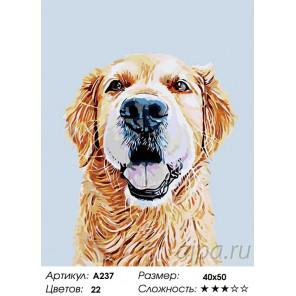 Количество цветов и сложность Дункан Раскраска картина по номерам на холсте A237