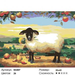 Овечка Раскраска картина по номерам на холсте RA007
