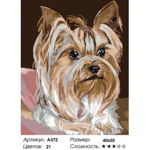 Количество цветов и сложность Послушная собачка Раскраска по номерам на холсте Живопись по номерам A372