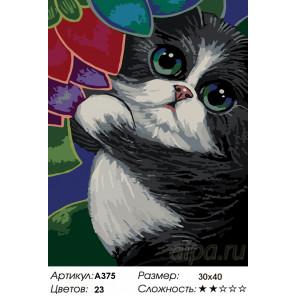 Количество цветов и сложность Котик в саду Раскраска по номерам на холсте Живопись по номерам A375