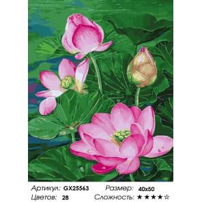 Количество цветов и сложность Красота лотоса Раскраска картина по номерам на холсте GX25563