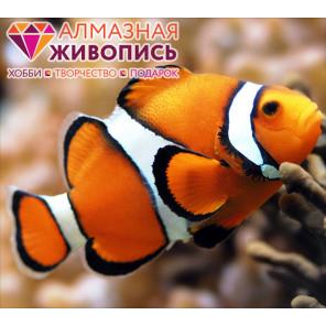 Рыба клоун Алмазная вышивка мозаика АЖ-1061