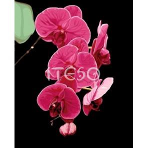 Таинственная орхидея Раскраска по номерам акриловыми красками на холсте Iteso